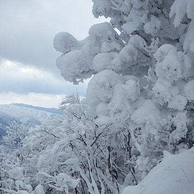 雪が多い日にはモンスターのような巨大な霧氷が出来上がります