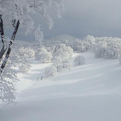 奈良にもある白銀の世界