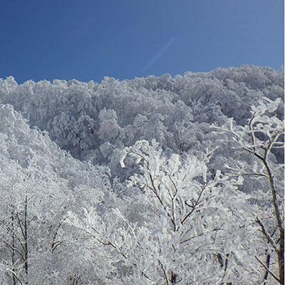 霧氷と積雪が広がる山を眼下に見ることができます