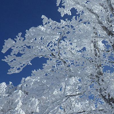 霧氷で有名な三峰山では頭上にはこんな風景が広がります