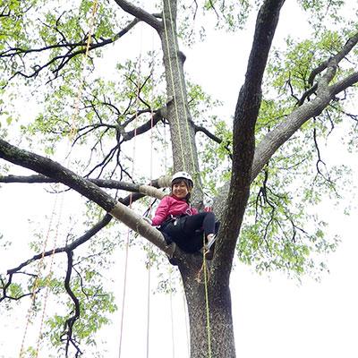 奈良で木登りするなら、エバーグリーン