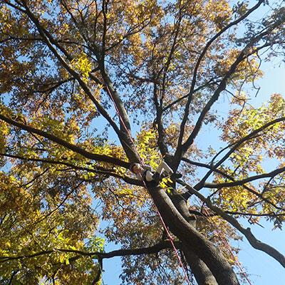 紅葉をツリーイングで間近に感じちゃいましょう