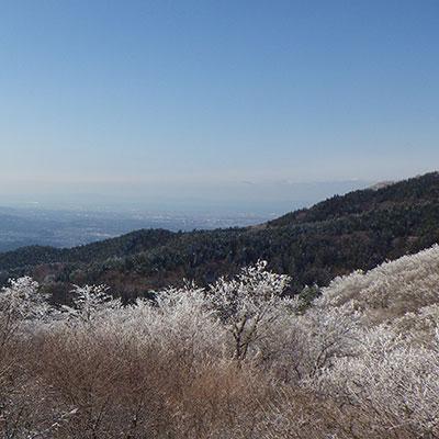 奈良の山はエバーグリーンにお任せください